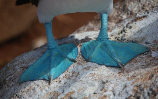 peinture bleu canard